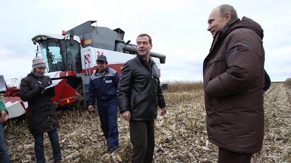 путин садит кукурузу